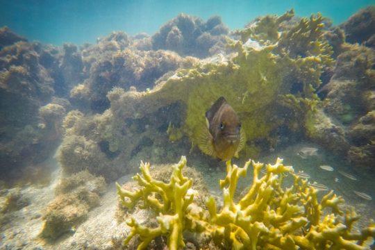 O mergulho está entre os atrativos da região. Foto: Divulgação